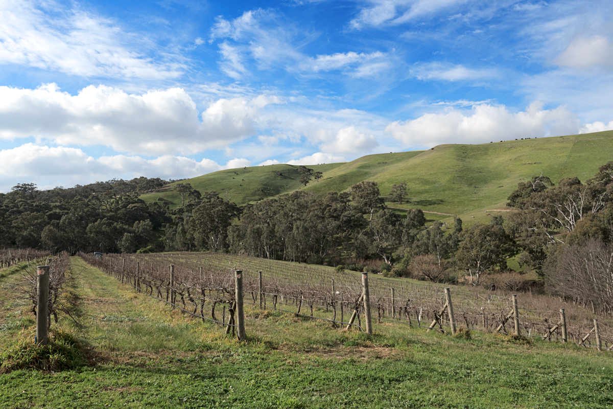 Moorabool Ridge Winery View